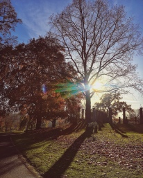 Nachmittagssonne im Rosensteinpark